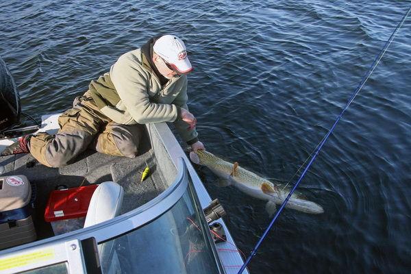 Почему поймать, а потом отпустить - жестоко для рыбы. 14000.jpeg