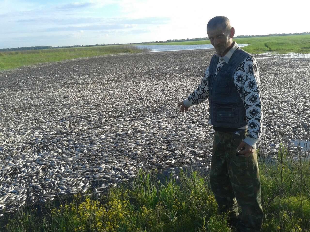 В Астраханской области рыба не поместилась в реке. 15001.jpeg