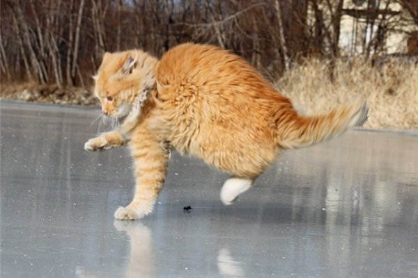 Неудачная рыбалка кота взорвала интернет. 14002.jpeg