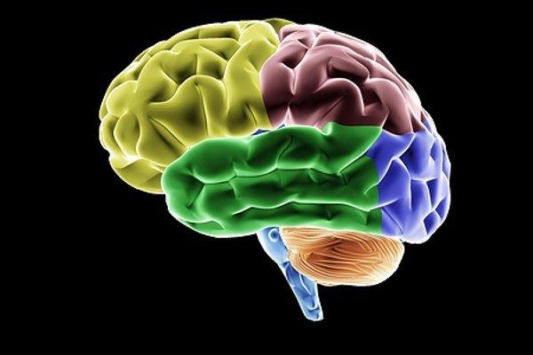 Ученые нашли неизвестный «остров» в голове человека. 14005.jpeg
