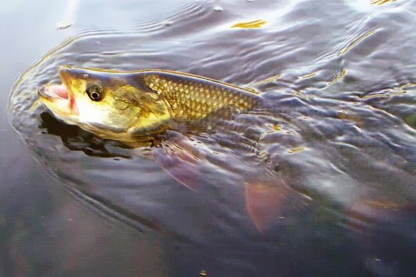 Весенняя рыбалка - рыбьи «маневры». 15008.jpeg
