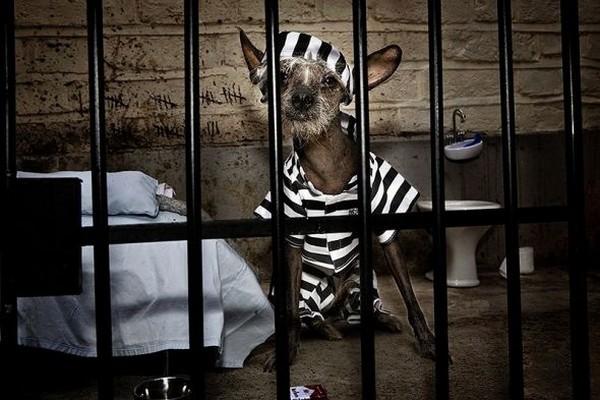 Щенка хау-хау выпустили из английской тюрьмы. 14010.jpeg