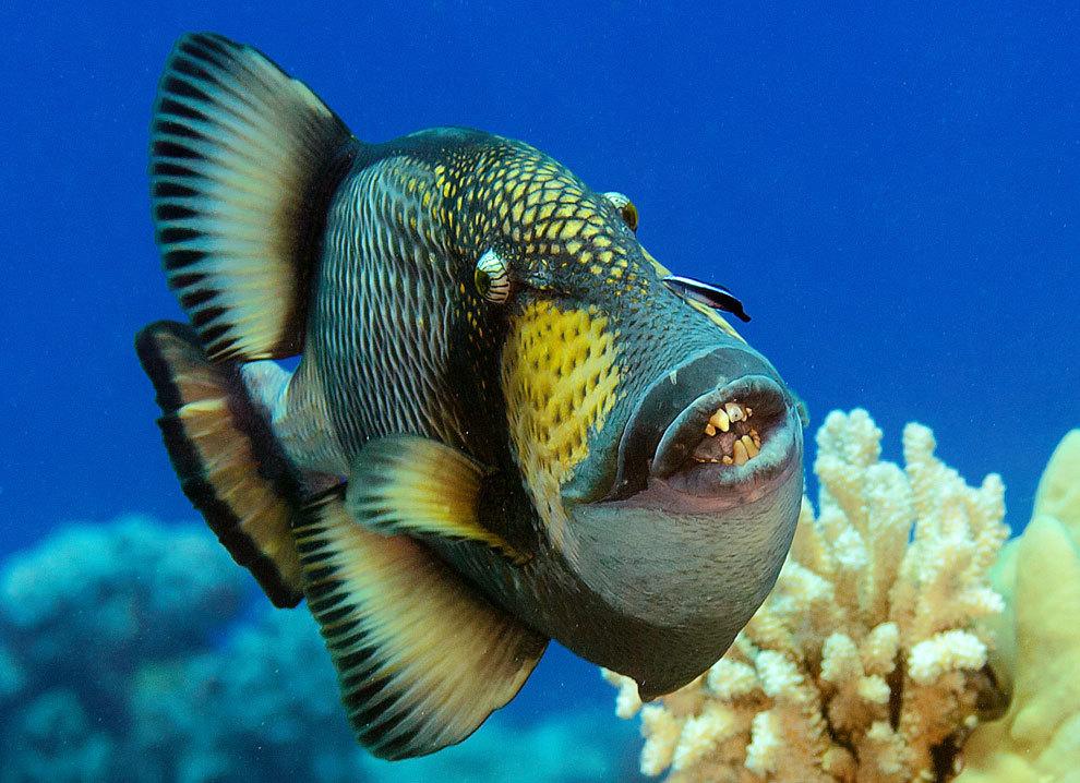 Олега Газманова хотела съесть рыба. 15010.jpeg