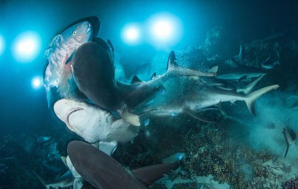 Фотовыставка. Прекрасное и безобразное в подводном царстве. 15013.jpeg