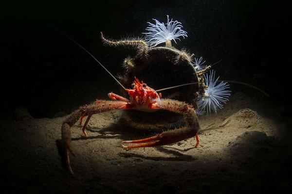 Фотовыставка. Прекрасное и безобразное в подводном царстве. 15016.jpeg