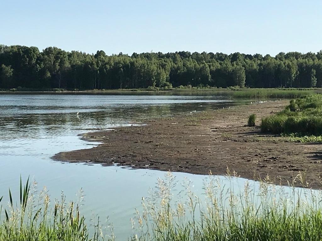 Под Ясногорском погибает рыбный пруд. 16016.jpeg