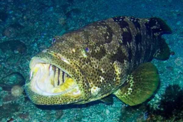 Рыбы,  находящиеся на грани вымирания. 15025.jpeg