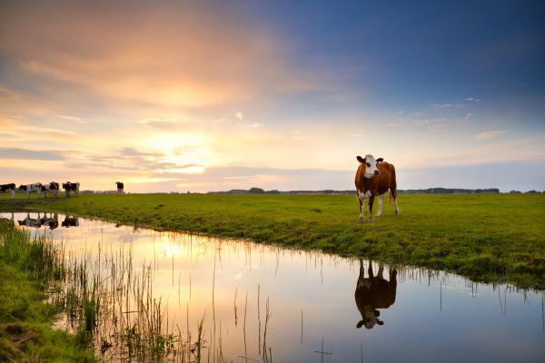 Гринпис: азотные удобрения и коровы уничтожают рыб. 14028.jpeg