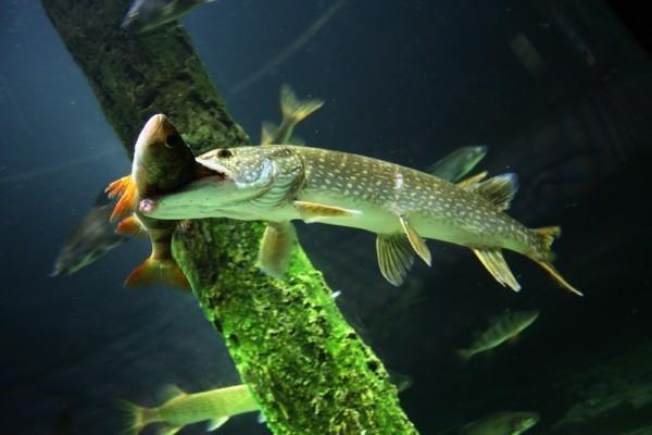 Как заманить рыбу: выбираем цвет. 15028.jpeg