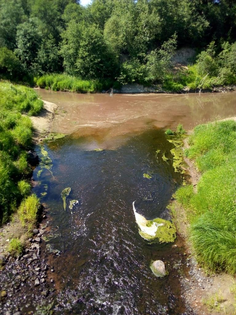 Река Войтоловка заражена отходами свинофермы. 16028.jpeg