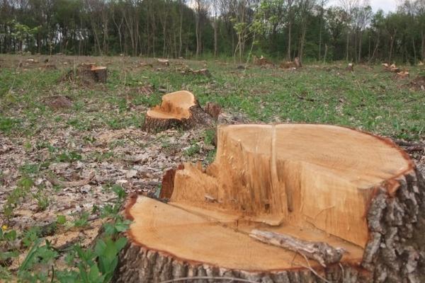 Россия может остаться без лесов. 14031.jpeg