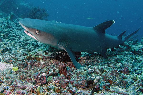 Причины, почему нам повезло иметь акул. 14034.jpeg