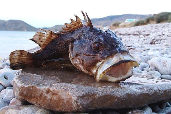 Особенности национальной рыбалки на ерша. 14036.jpeg