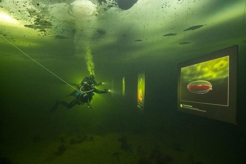 Подо льдом Белого моря открылась Фотовыставка. 15039.jpeg