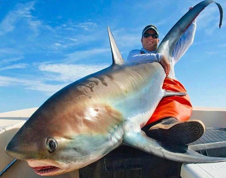 Греки поймали лисью акулу весом 100 килограммов. Лисья акула