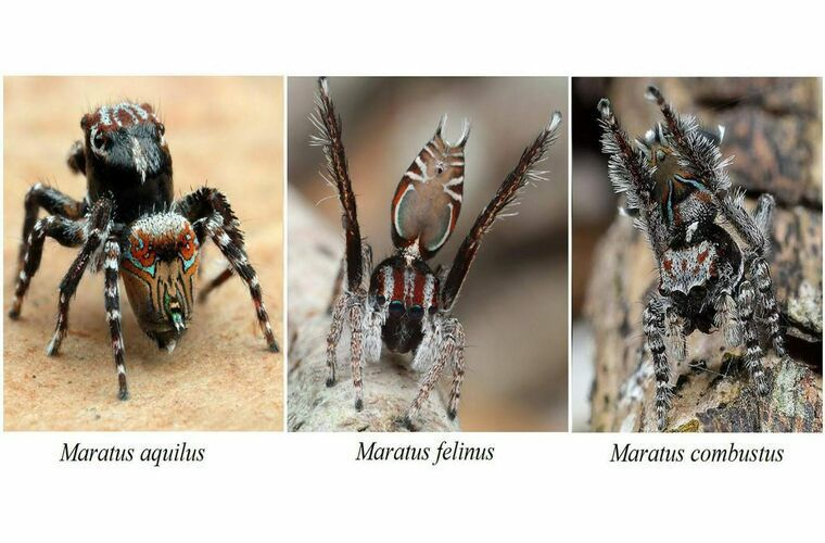 В Австралии нашли неизвестных науке пауков. 15045.jpeg