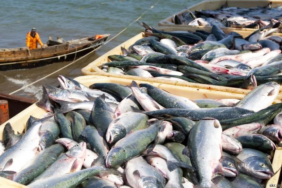 Потребление российской рыбы «на родине» не выше 12 кг в год. 16045.jpeg