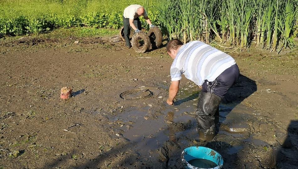 Владимирцы спасли рыб из пересохшего пруда. 16054.jpeg