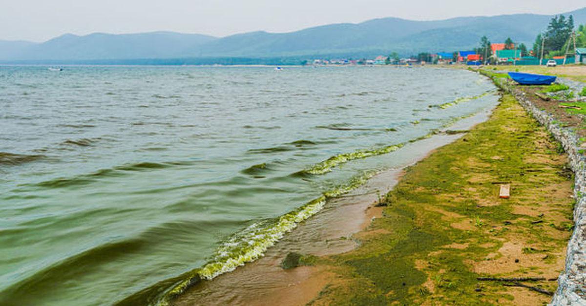 Байкальская вода может стать непригодной для питья. 16057.jpeg