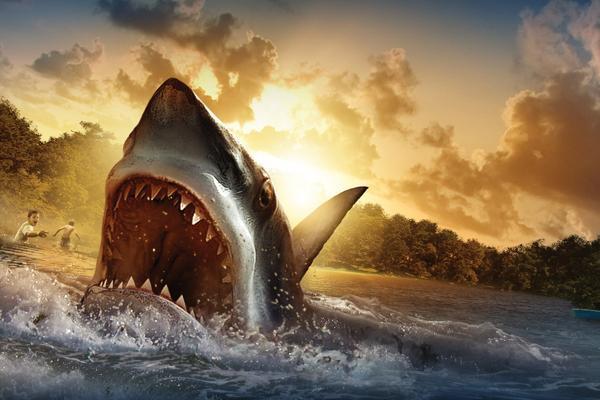 На Багамах акула напала на рыбака. 14059.jpeg