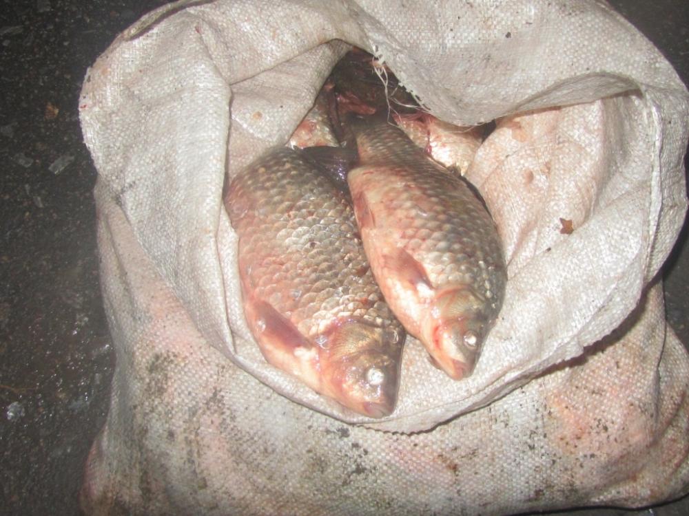 В Приморье не дали совершиться нелегальному сбыту рыбы. 16076.jpeg