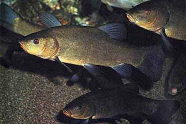 Рыба, достойная вашего спиннинга. 14077.jpeg