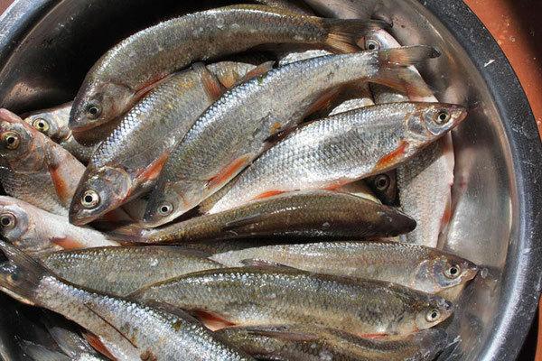 Рыба всегда возвращается домой. 14082.jpeg
