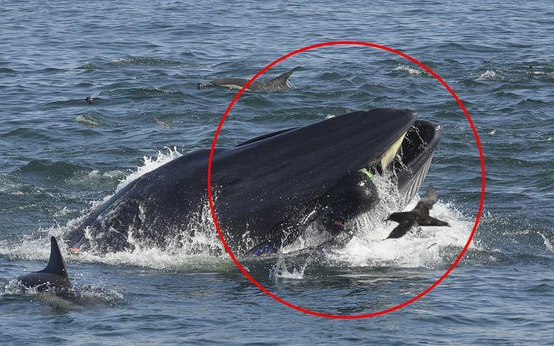 Дайвер выбрался из пасти кита живой и невредимый. кит