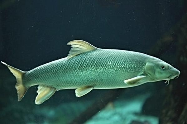 Рыба-непоседа. 14086.jpeg