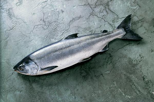 Ловля «собачьего лосося». 14097.jpeg