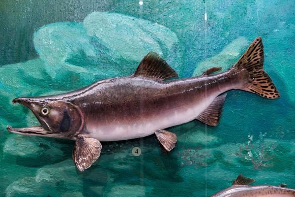 Интернациональная рыба. 14098.jpeg