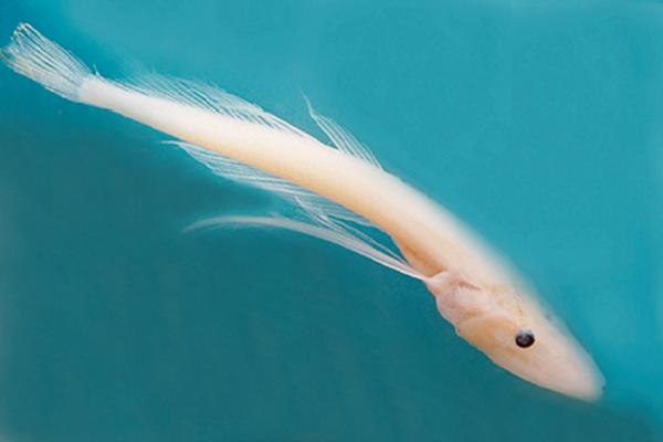 Прозрачная рыба. 14099.png
