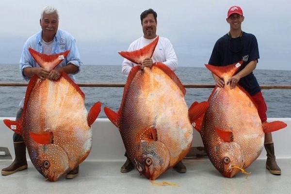 Солнечная рыба Опа. 14105.jpeg