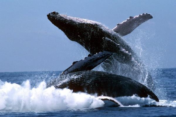 Удивительные факты о китах. 14107.jpeg