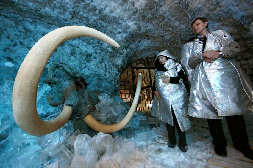 Ученые близки к оживлению мамонта. мамонт