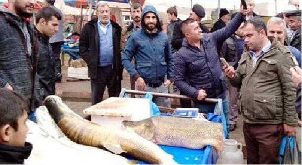 В Сиирте якобы поймали 120-килограмовую щуку. щука