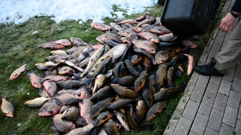 Донской браконьер пойман с более пятьюстами рыбами в сети. 16113.jpeg