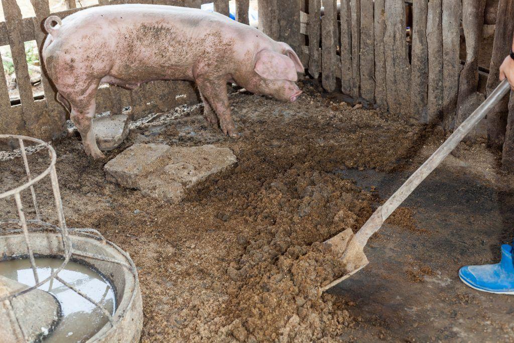 Мор в чувашском пруду произошел из-за свинофермы. 16115.jpeg