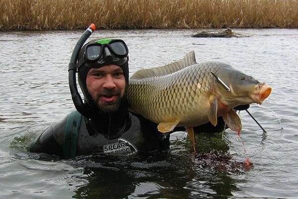 Что нужно знать о подводной охоте на сома. 15120.jpeg