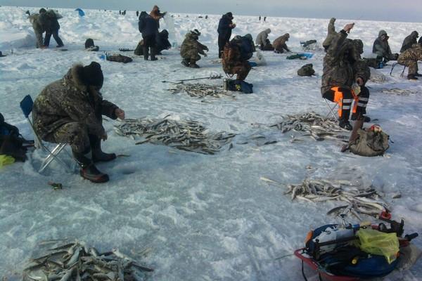 Несколько советов начинающему рыболову- зимнику.. 14121.jpeg