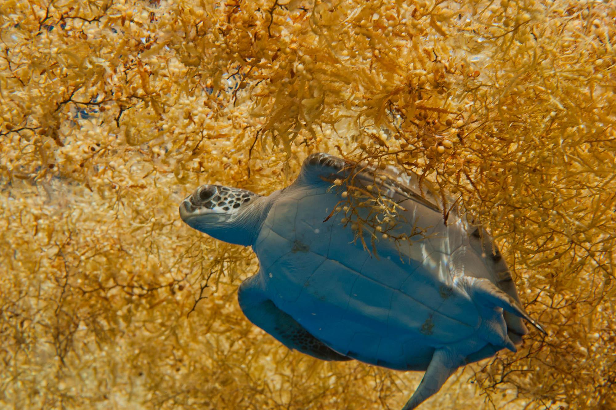 Атлантической рыбе угрожают водоросли. 16122.jpeg