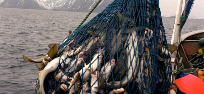 В Севастополе планируют заняться рыбопереработкой. 16130.jpeg