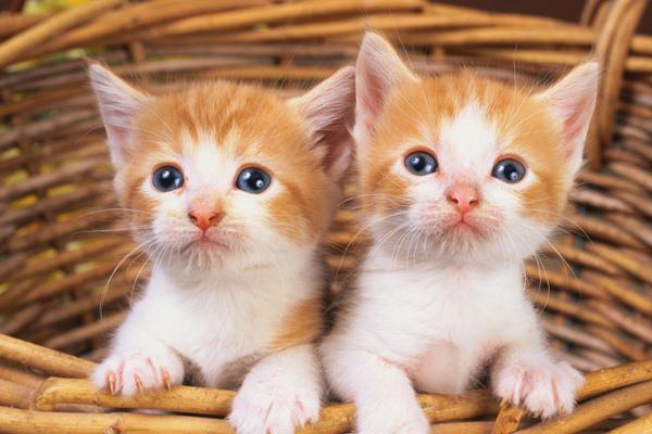 Депутат объяснил, как нужно обращаться с кошками. 14132.jpeg