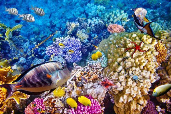 Рыбы любят дом, где родились. 14137.jpeg