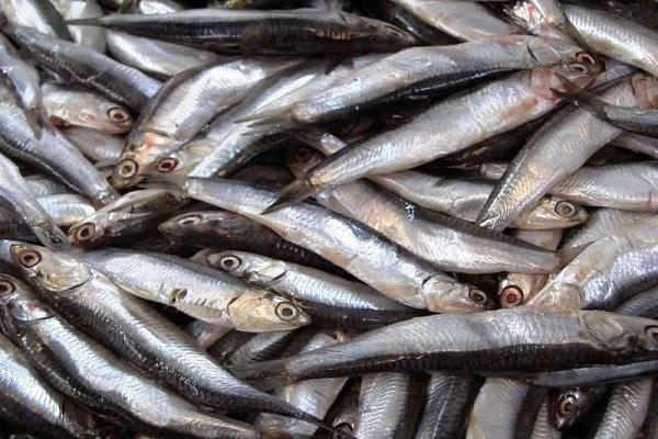 Рыба на любой вкус. 14141.jpeg