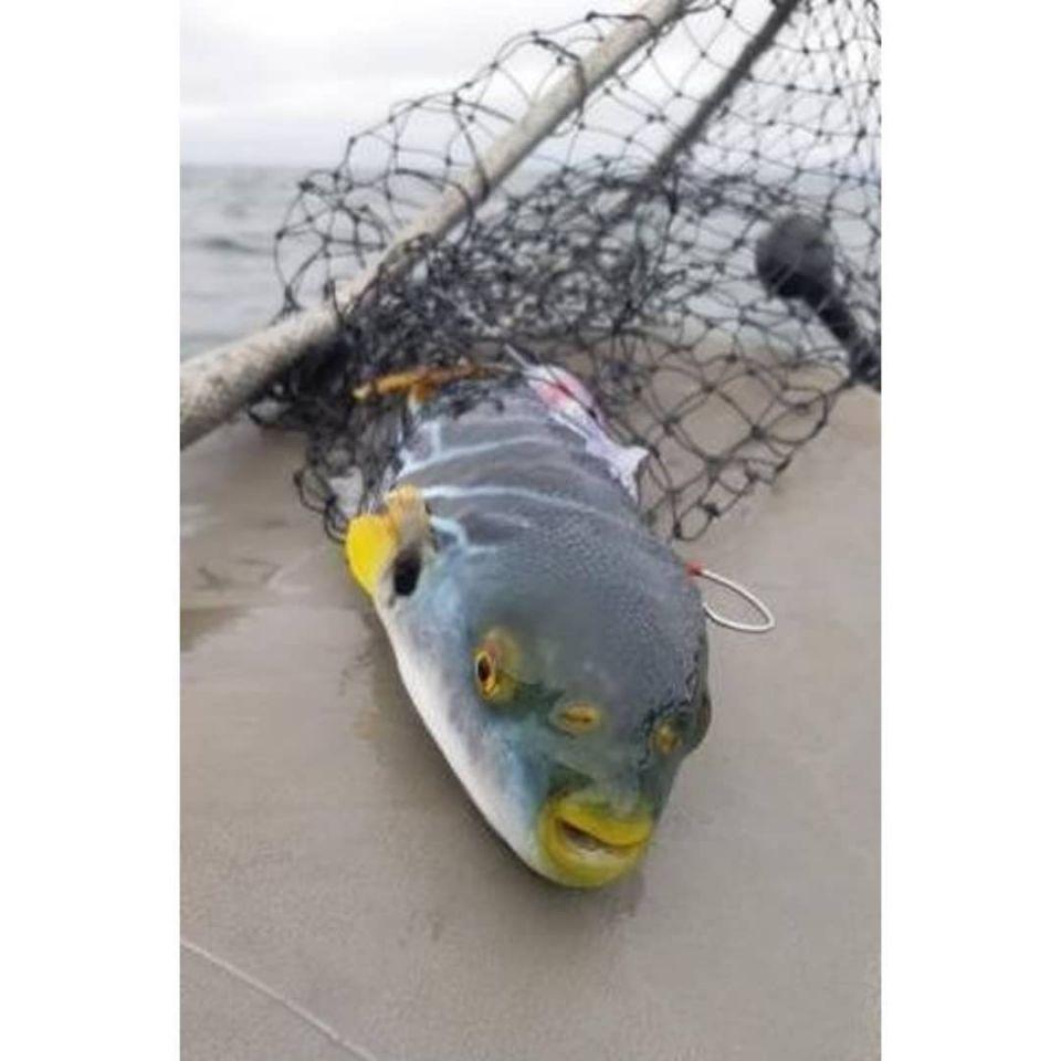 """""""Трехглазую"""" рыбу выловили в Приморье. 16145.jpeg"""