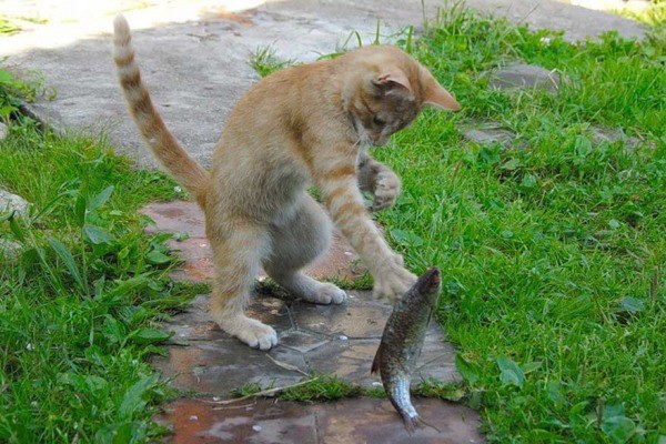 Себе не обязательно, а коту надо доказывать, что ты рыбак.. 14154.jpeg