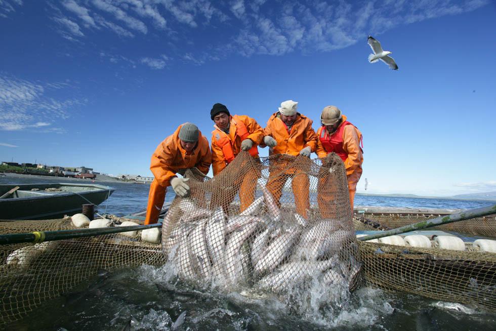 Сбербанк намерен инвестировать в рыбопром. 16154.jpeg