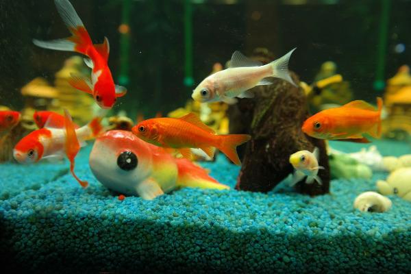 Топ самых необычных рыб в мире. 14157.jpeg
