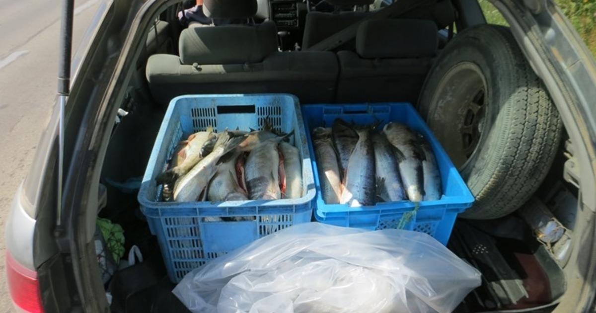 Рыбак погубил себя своим хвастовством. рыба